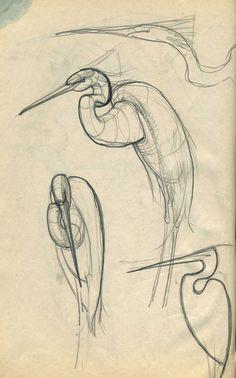 Pencil Drawings Of Animals, Horse Drawings, Animal Sketches, Bird Drawings, Art Drawings Sketches, Sketch Drawing, Drawing Ideas, Drawing Animals, Drawing Tutorials