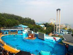 Blog post about day trip to Ocean Park, Hong Kong   Just Mudding Through Life