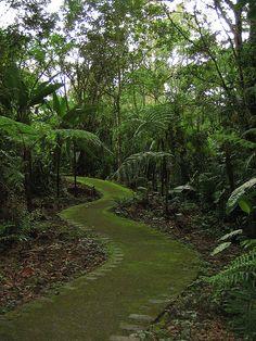 Lankester Tropical Gardens in Valle de Orosi, Costa Rica (by Steveningen).
