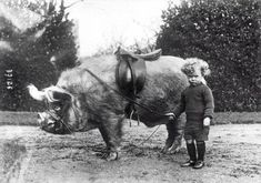 Boy with his Boar