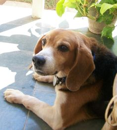 India issues guidelines for giving dogs a home | Cruelty Free International