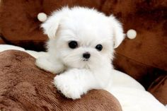 i wanna know what kind of dog this is because i WANT one!!!!