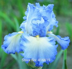 Popular Tall Blue Flowers-Buy Cheap Tall Blue Flowers lots from ...