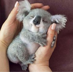"""Sweet baby koala dreams By via 🐨 What would YOU name him? Sweet baby koala dreams 🌙 ✨ By """"pinner"""": {""""username"""": """"pictureforyouwebsite"""", """"first_name"""": """"Picture For You"""", """"domain_url"""":. Baby Animals Super Cute, Cute Little Baby, Cute Little Animals, Cute Funny Animals, Little Babies, Cute Babies, Little Dogs, Baby Animals Pictures, Cute Animal Photos"""