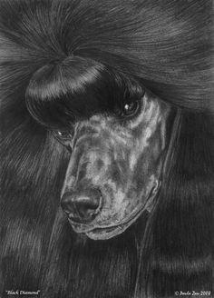 "Poodle Miniature art print ""Black Diamond"" by Paula Zan"
