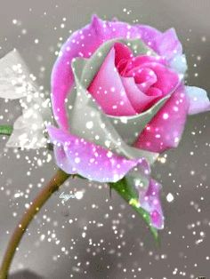 Нежность розы Roses Gif, Flowers Gif, Cool Pictures Of Nature, Pretty Pictures, Beautiful Rose Flowers, Beautiful Flowers, Gif Lindos, In Memory Of Dad, Gifs