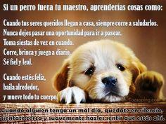 Mi perro, mi maestro!! #nutrimascotas #miperromifamilia #amomiperro