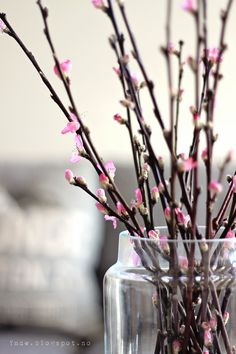Cherry branches