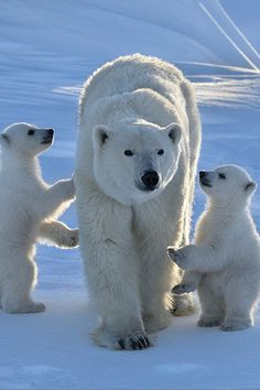 wolverxne:Our mum is the best ~ by: Nikolai Zinoveiv