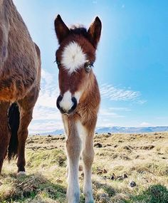 😍🐴😍i love this little guy and we never met - April or Avril is a great name don't you think! 📸 Do you guys have any name suggestions? 💘 I've been thinking about Apríl cause its not usual for us to get the first foal so early 😁 h Baby Horses, Cute Horses, Wild Horses, Beautiful Horses, Origami Horse, Baby Animals, Cute Animals, Gifts For Horse Lovers, Horse Quotes