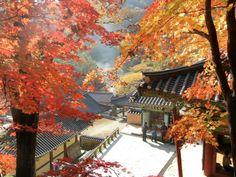 Yongmun -temple in autumn Yangpyeong,South Korea South Korea, Temple, Autumn, Painting, Travel, Art, Art Background, Viajes, Fall Season
