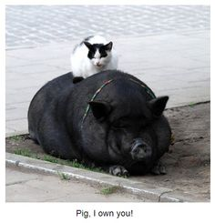 Kitty rides piggy