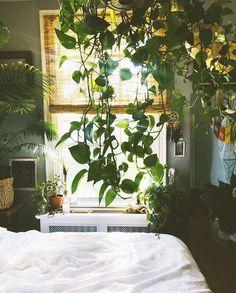 Urban Jungle Bloggers™ (@urbanjungleblog) • Instagram photos and videos