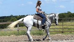 Could this handsome grey gelding be the rodeo horse you've been looking for?
