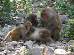 monkey island in Cat Ba