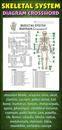 Heart crossword with diagram editable student learning help students learn and remember the parts of the skeletal system using this diagram crossword ccuart Gallery
