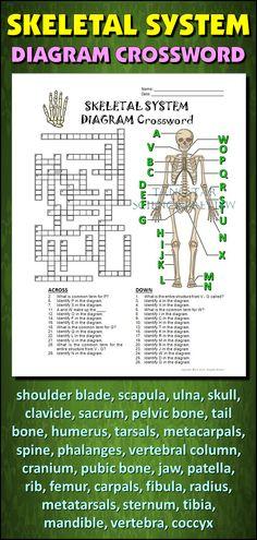 make a paper skeleton to label bones school pinterest skeletal system worksheet pdf skeletal system worksheet pdf skeletal system worksheet pdf skeletal system worksheet pdf