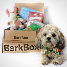 15 Gifts That Will Definitively Prove You Love Your Dog | Bark Box ...
