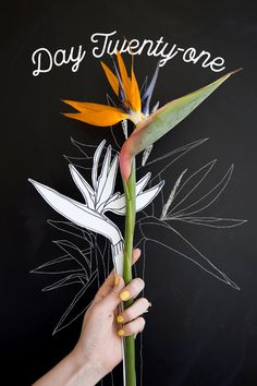 Flower Drawing Day How to draw a bird of paradise - The House That Lars Built - Day 21 of the Paradise Plant, Birds Of Paradise Flower, Exotic Flowers, Tropical Flowers, Exotic Birds, Colorful Birds, Plant Drawing, Painting & Drawing, Drawing Stencils
