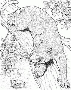 Find This Pin And More On Wild Animal Coloring Pages
