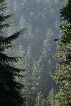 Pine trees, missing California just a little today. Beautiful Forest, Beautiful Places, California Camping, Pine Forest, The Great Outdoors, Mother Nature, Wilderness, Oregon, Woodland