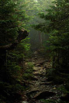 Explore your inner landscape ~ the strange forest www.barefoot-carefully.co.uk