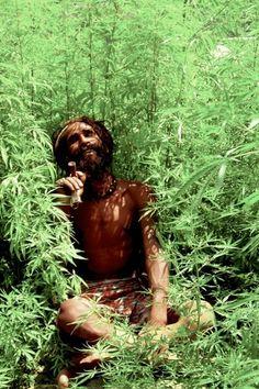 """Ganja e marijuana são algumas designações para a Cannabis, uma erva psicoativa milenar. Ela é usada pelos Rastas, não para diversão ou prazer, mas sim para limpeza e purificação em rituais controlados. Alguns Rastas escolhem não a usar. Muitos sustentam o seu uso através de Génesis 1:29: [carece de fontes]  """"E disse Deus: Eis que vos tenho dado toda a erva que dê semente, que está sobre a face de toda a terra; e toda a árvore, em que há fruto que dê semente, ser-vos-á para mantimento."""""""