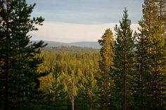 Forests in Käyrämö, Rovaniemi in Finnish Lapland. Photo by Jani Kärppä. #filmlapland #arcticshooting #finlandlapland