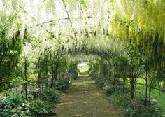 Dean House Garden in Hampshire