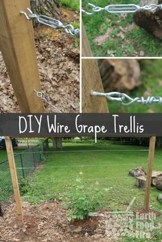Rose Gardening Learn how to build a wire trellis with this DIY weekend project. This trellis is great for climbing vegetables, grapes and even roses! - The perfect DIY weekend project. This trellis is great for climbing vegetables, grapes and even roses! Grape Vine Trellis, Wire Trellis, Organic Gardening, Gardening Tips, Vegetable Gardening, Urban Gardening, Hydroponic Gardening, Flower Gardening, Backyard Vineyard