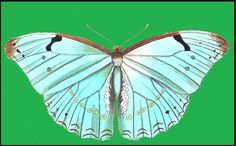 Мастер класс бабочки бумаги мастер класс