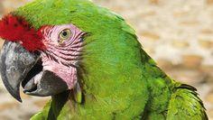 Palenque 16 Tage Wunderwelten-Reise. Papagei (© Chamäleon)