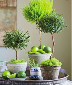 Garden Plans Topiary Containers - Tap The Link Now For More Awesome Fun and Function products for Your House.Garden Plans Topiary Containers - Tap The Link Now For More Awesome Fun and Function products for Your House Topiary Plants, Topiary Garden, Planters, Topiary Decor, Boxwood Topiary, Topiary Trees, Decoration Plante, Decoration Table, Green Decoration
