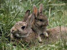 1000 images about rabbits and spring stuff on pinterest