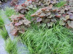 Coral bells (Heuchera spp, zones 3 to 9) are a must-have in planting schemes, lasting well into early winter with good form. In fact, they're one of the best plants for overall functionality — used as a massing ground cover or as accents, they look good pretty much all the time.    Look for unusual colors like burgundy or chartreuse, and variegated forms with silver accents, and place them in containers by your door and along front walkways.