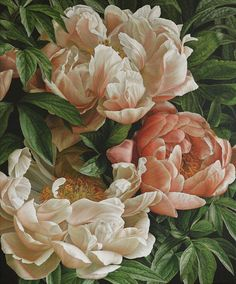 Mia Tarney Coral Charm II, 2014 Oil on Linen 57 x ins / 145 x 127 cm Private Commission Botanical Flowers, Botanical Illustration, Botanical Prints, Illustration Art, Illustrations, Peony Painting, Watercolor Flowers, Painting & Drawing, Floral Paintings