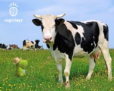 """Here's a cow knock knock joke from CogniToys that we hope makes you giggle today! """"Knock knock."""" """"Who's there?"""" """"Cows say."""" """"Cows say who?"""" """"No silly, cows say mooooo!"""""""