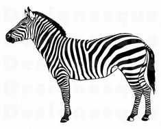 detailed illustration of zebra Poster Zebra Clipart, Zebra Drawing, Black And White Quilts, Clip Art, Vector Photo, Pebble Painting, Dog Paintings, African Animals, Fauna