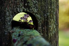 Fungi fence by Thuyhn, via Flickr