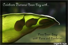 Fava Bean #SOUP #Recipe CLICK Here: http://ospa.me/1rYWbw4  #nationalbeanday