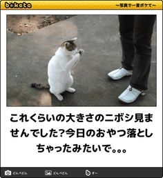 これくらいの大きさのニボシ見ませんでした?今日のおやつ落としちゃったみたいで。。。 Animals And Pets, Funny Animals, Book Pillow, Funny Phone Wallpaper, Cats And Kittens, Funny Cats, Laughter, Dog Cat, Funny Pictures