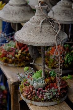 Repurposed hanging lights used as a Succulent Container Garden
