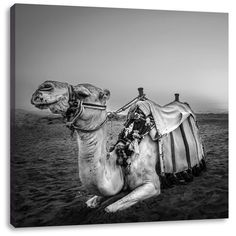 Camel at Sundown in Egypt Photographic Print on Canvas East Urban Home Animals Black And White, Black And Grey, Frames On Wall, Framed Wall Art, Painting Prints, Art Prints, Canvas Art, Canvas Prints, Kitchen Living