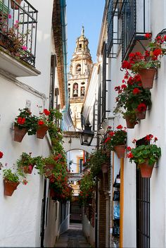 Callejón de las flores, Cordoba, Spain It looked just like this when I was there in 1977. Red geraniums on white walls - beautiful!