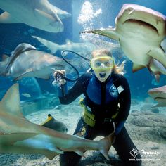 Feel the thrill! 'Shark Dive' at the Melbourne Aquarium is a must visit if you are in #Australia. Repin