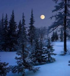 17 Trendy Photography Winter Night Beautiful Moon The Effective Pictures We Offer You A Winter Szenen, Winter Moon, I Love Winter, Winter Images, Winter Photos, Moon Photography, Winter Photography, Moonlight Photography, Art Blanc