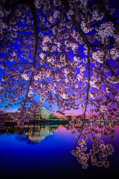 Cherry Blossom Dawn, Sakura, Japan Travel and Photography from around the world. Beautiful World, Beautiful Places, Wonderful Places, All Nature, Amazing Nature, Japan Travel, Belle Photo, Pretty Pictures, Beautiful Landscapes
