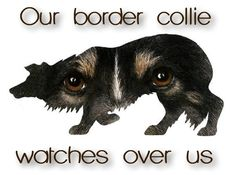 Our Border Collie watches over us