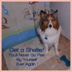 Me and my sheltie...