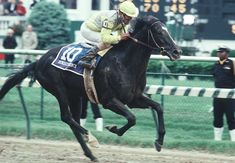 Sunday Silence- 1989 Kentucky Derby and Preakness winner- So close to being our last Triple Crown Champ, took second in the Belmont Preakness Winner, The Belmont Stakes, Derby Winners, Penelope, Thoroughbred Horse, Most Beautiful Animals, Racehorse, Horseback Riding, Kentucky Derby